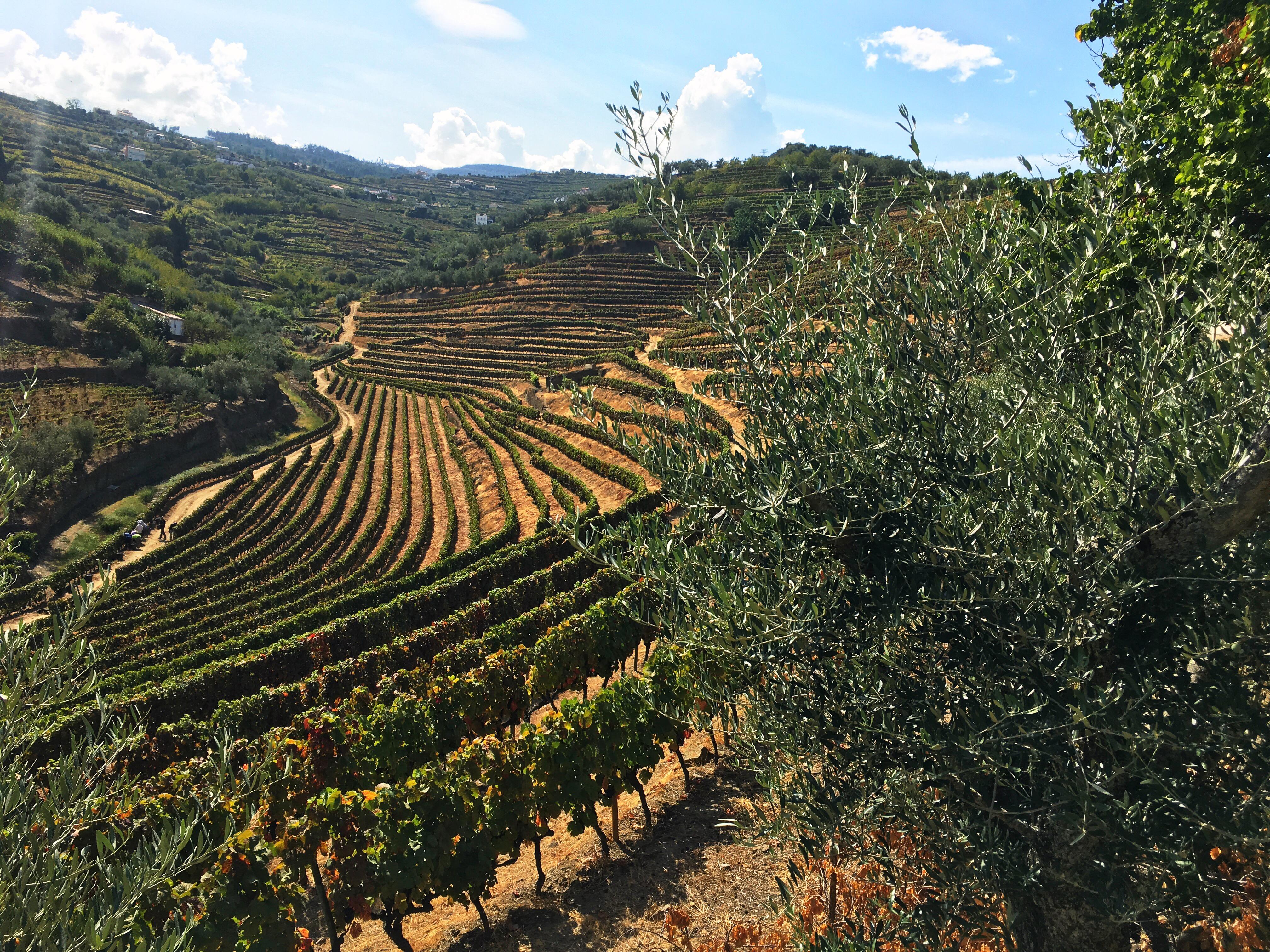 Quinta das Lamelas - Douro - Socalcos - Terraces