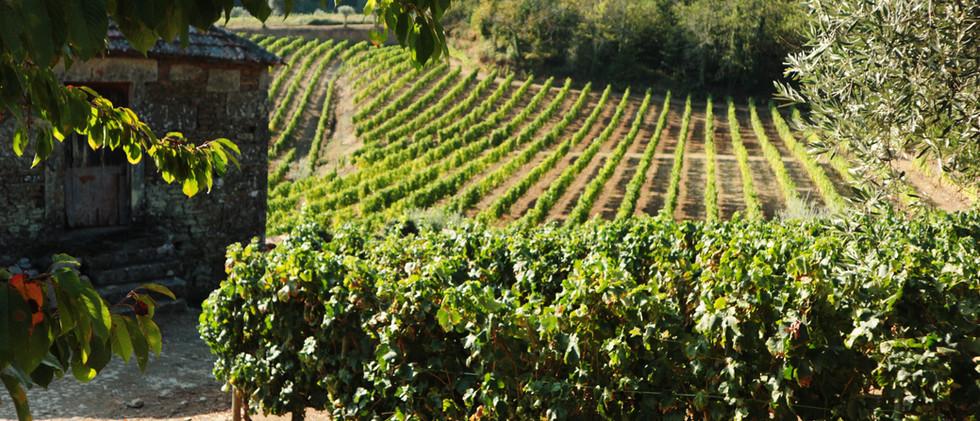 Quinta das Lamelas - Vale da Renda - Douro