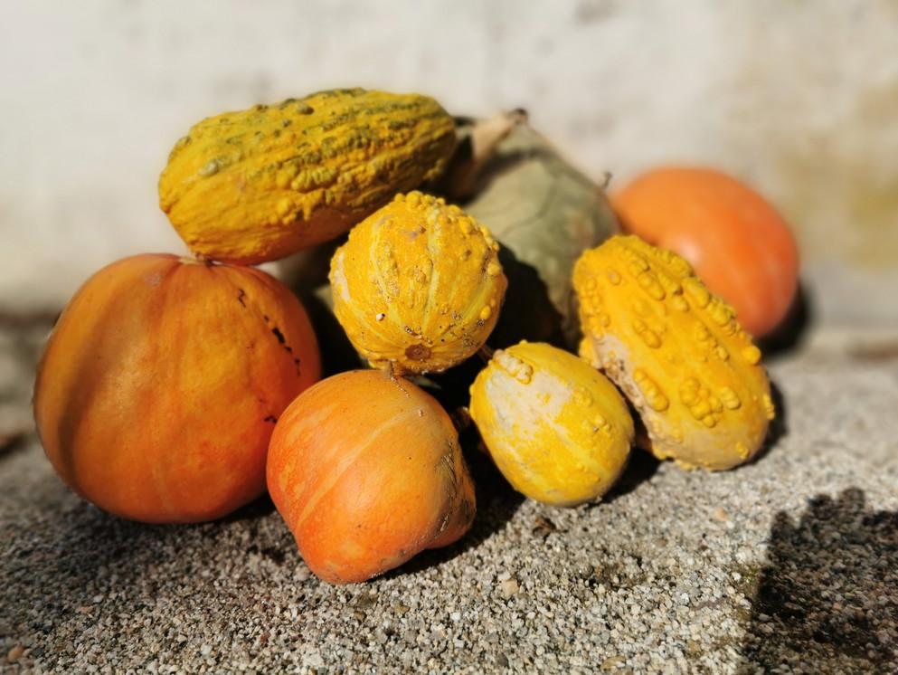 Quinta das Lamelas - Pumpkin