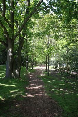 HOTC_Fairy Trail.JPG