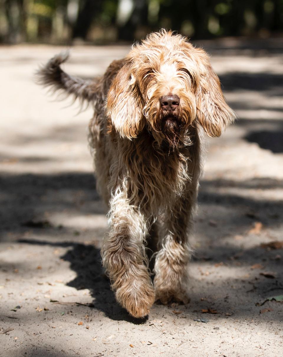 HundeWannseeSpreitz0028