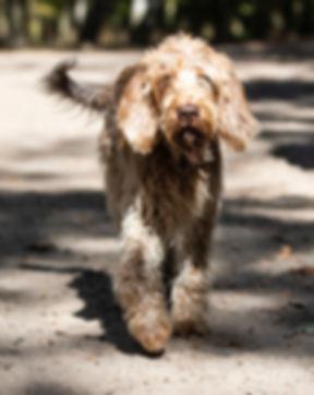 HundeWannseeSpreitz0028.jpeg