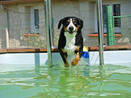 A la piscine !