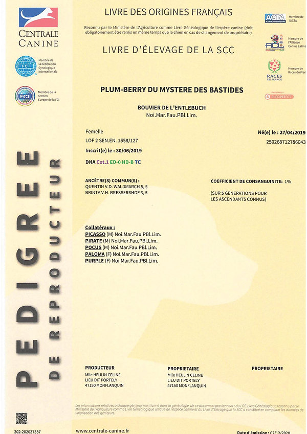 PEDIGREE PLUM1.jpg