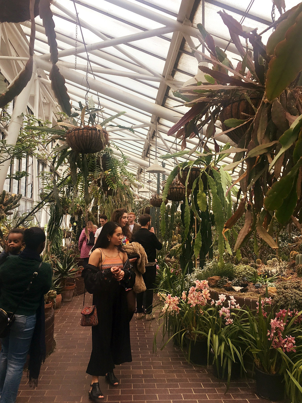 The Cactus enclosure of the Barbican Conservatory
