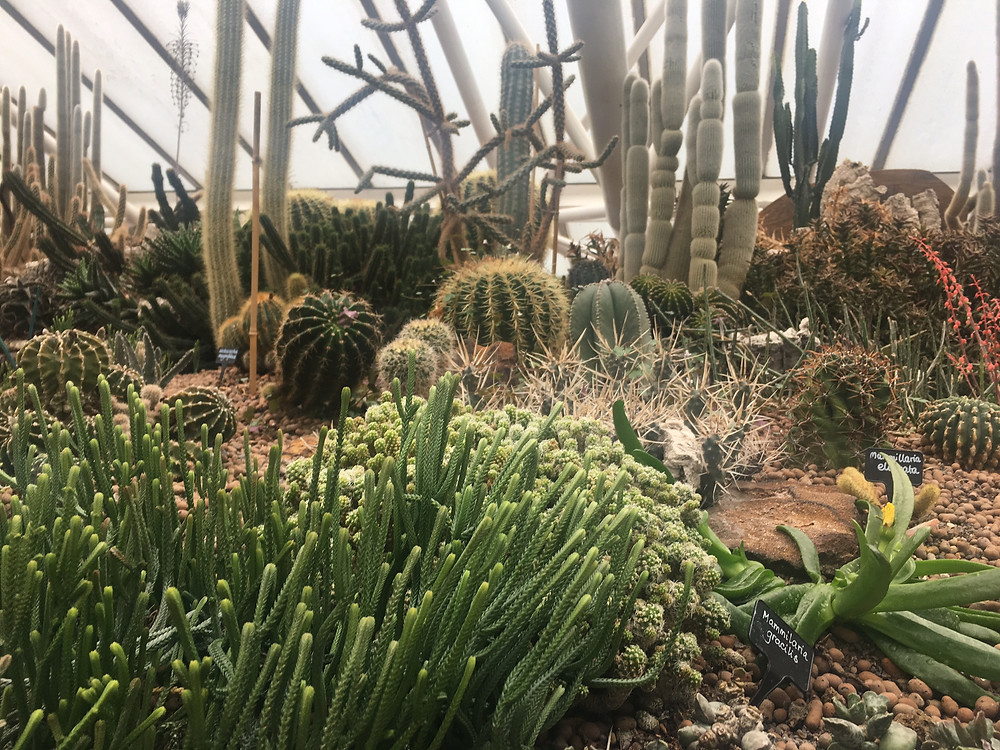 The cactus enclosure