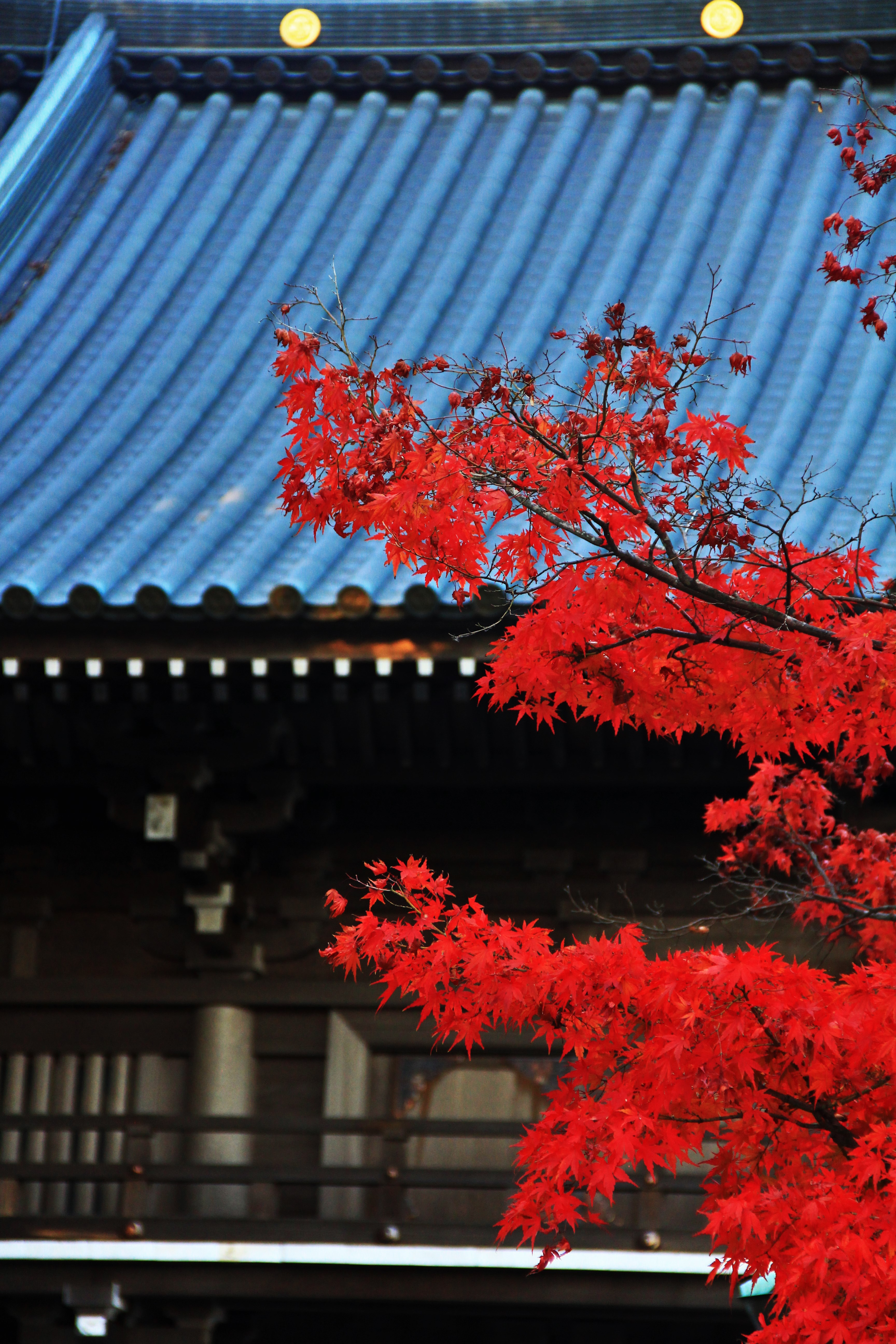 山寺紅葉 temple and flame-red maple