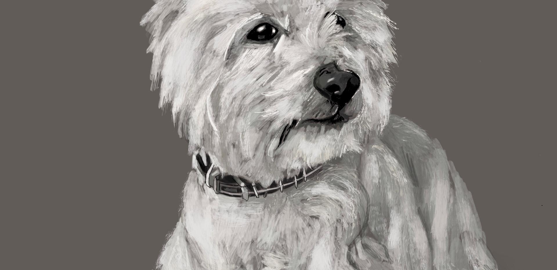 Dog-Kiran (SOLD)