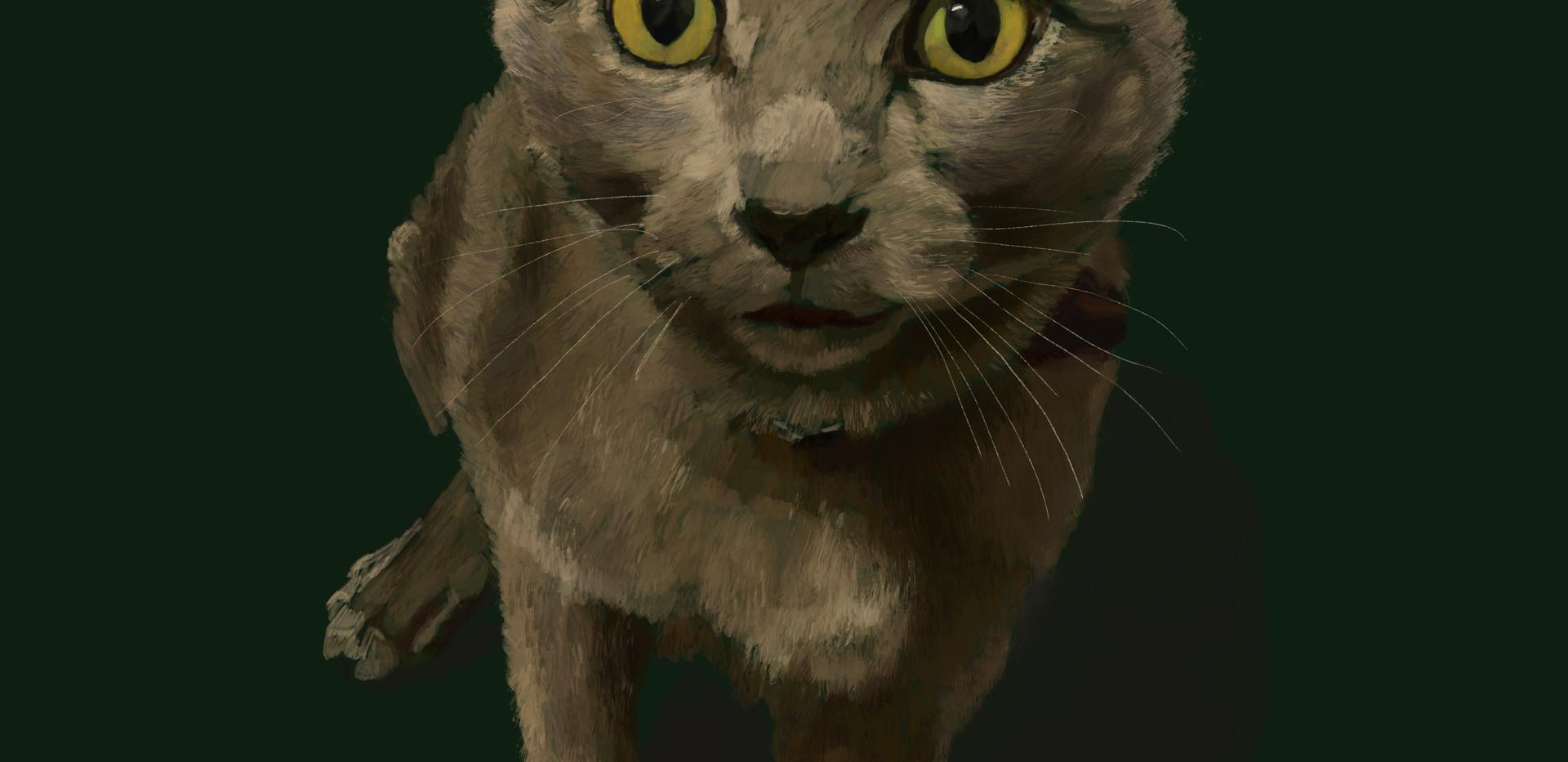 Cat- Dmitry