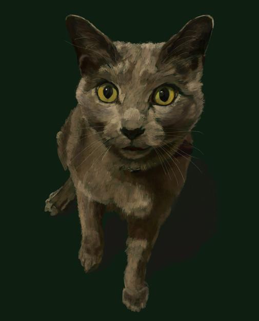 Cat- Dmitry (SOLD)