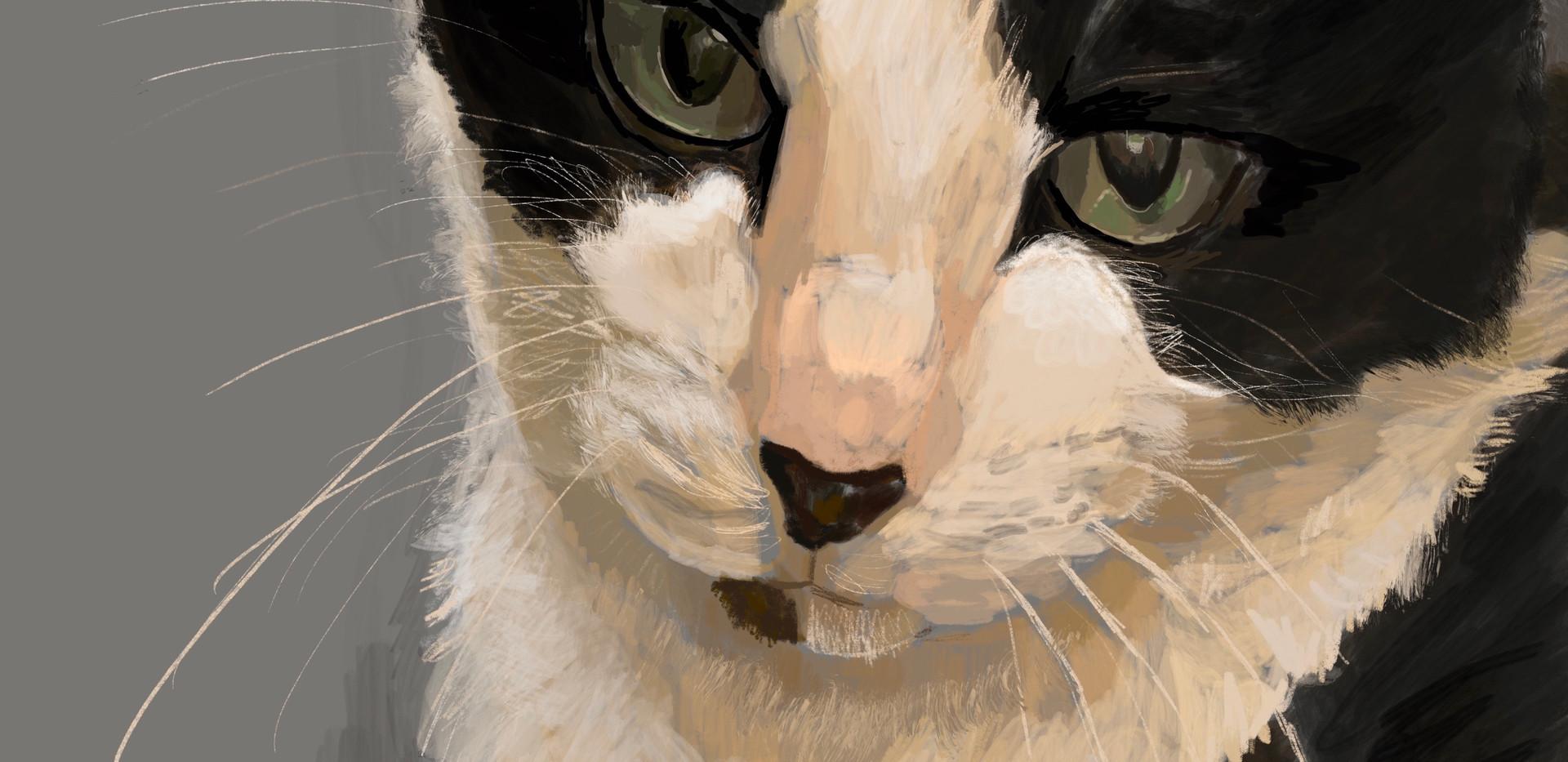Cat-Bandit (SOLD)