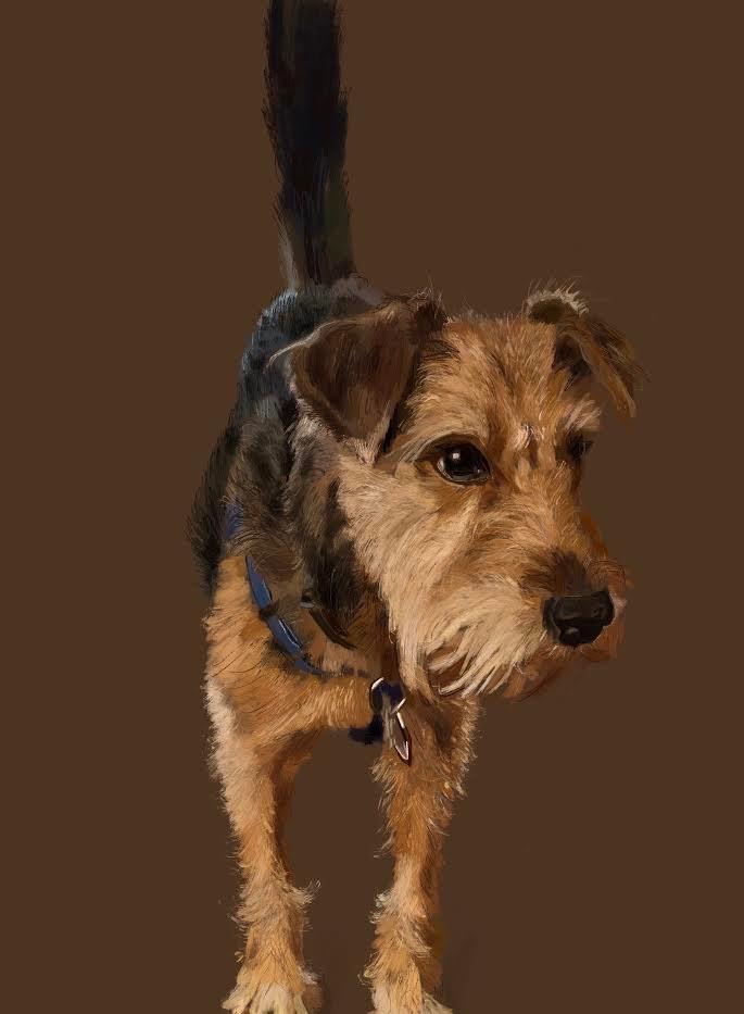 Dog Dexter
