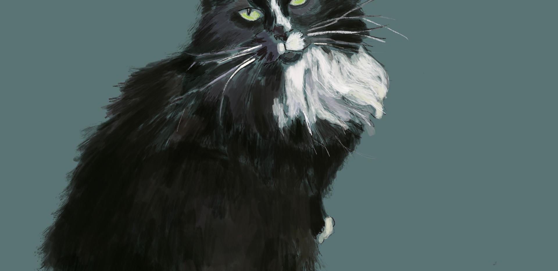 Cat-Sylvester