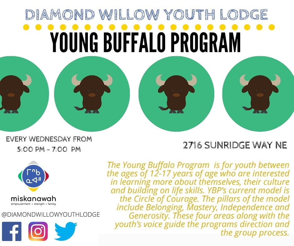 Young buffalo program