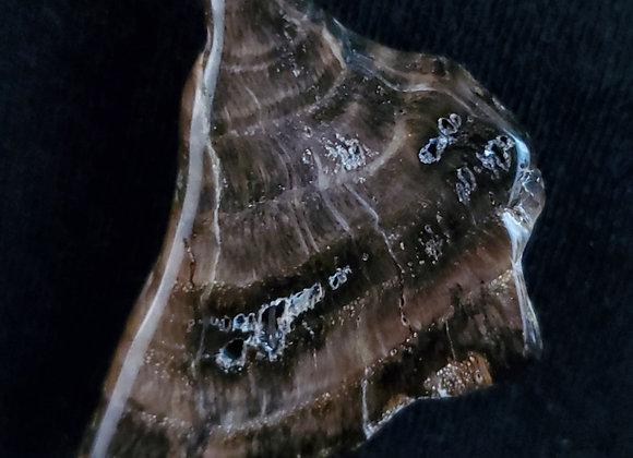 Magnet Rock-Petrified Wood