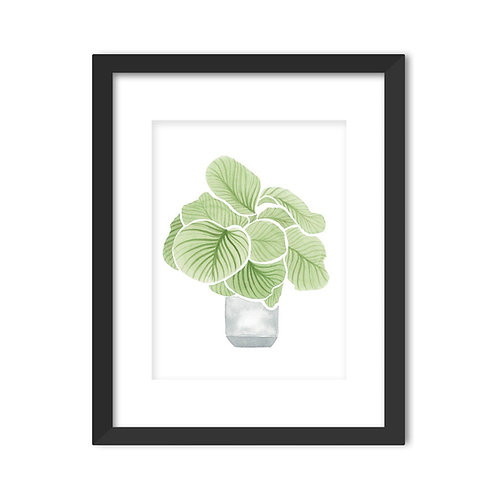 CALATHEA ORBIFOLIA WATERCOLOR ART PRINT