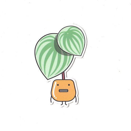 WATERMELON PEPEROMIA, VINYL STICKER