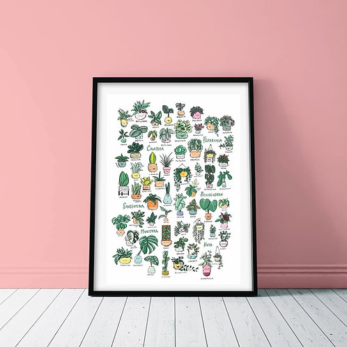 PLANT FAMILIES POSTER