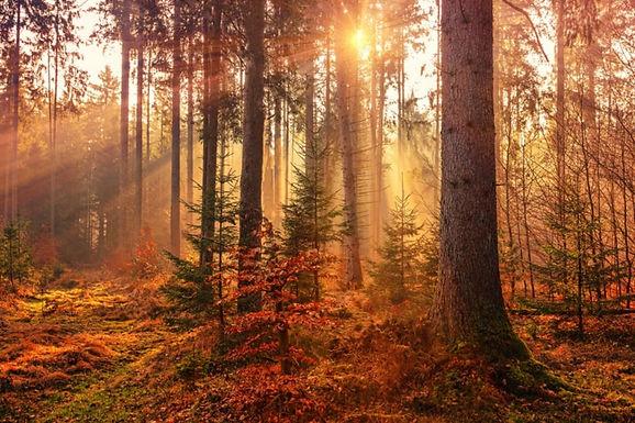 Luontoretki korjaa rytmejä: näin syöt ja nukut paremmin!