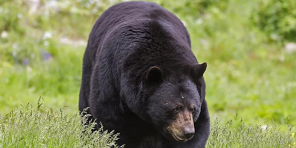 British Columbia Black Bear Hunts