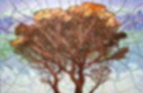 Pine_wix.jpg