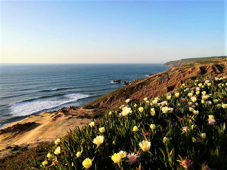 Casa Paco D'Ilhas flowers beach hill.jpg