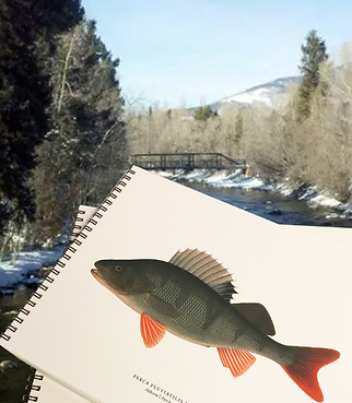 fish notebook.png