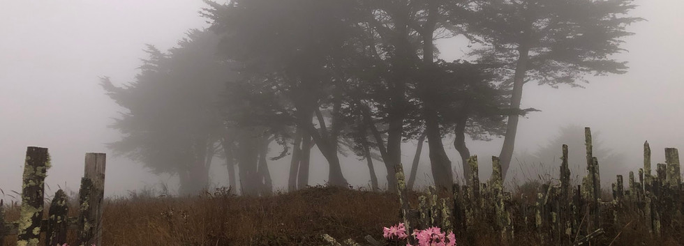 misty grounds.jpg