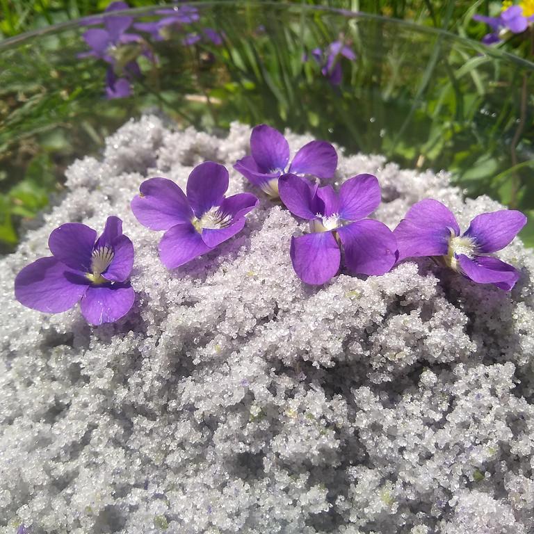 Spring Foraging