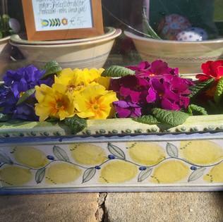 Blumenkasten Zitrone