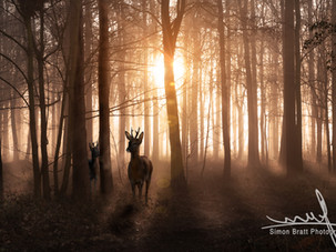 Landscape and Wildlife Photography