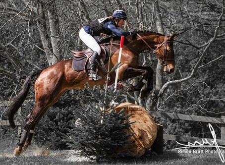 Magnificent Horses - Norfolk UK