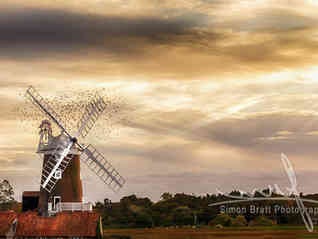 Norfolk windmill with flock of birds at sunset