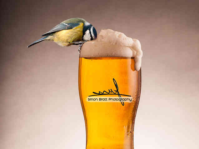 A beer for the birds
