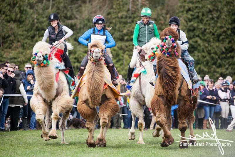 Burnham IHT 2017 Camels 7182