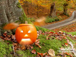 Scary halloween pumpkin in the woods