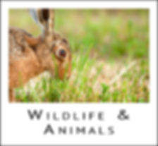 Wildlife & Animal Images