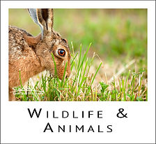Wildlife & Animal Images