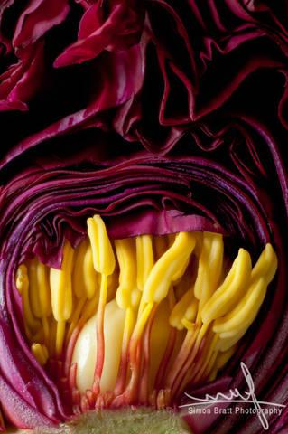 Inside a Peony flower bud close up