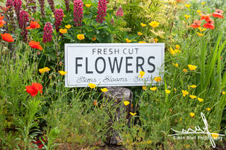 Garden flowers with fresh cut flower sig