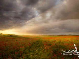 Gorgeous poppy field sunrise landscape