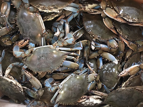 #2 Males Whole Bushel NC Live Blue Crab (PLACE ORDER)