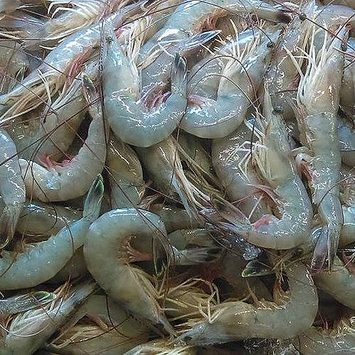Head On Fresh Wild NC Shrimp (PLACE ORDER)