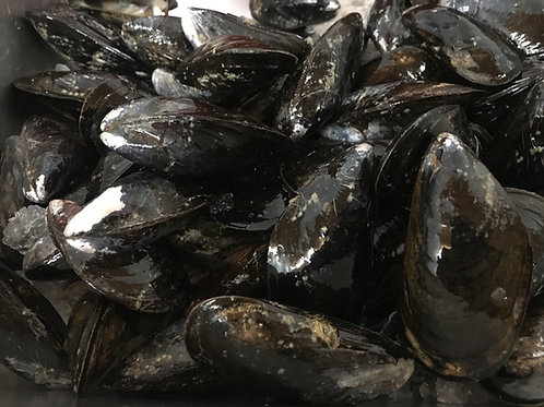 1 Sack Fresh Black Mussels (PLACE ORDER)