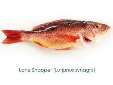 Fillet Lane Snapper (INSTANT ORDER)
