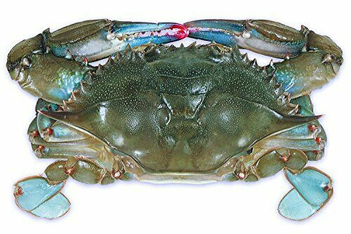 Soft Shell Crabs (INSTANT ORDERS)