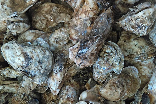 50 Count James River Virginia Oysters (PLACE ORDER)
