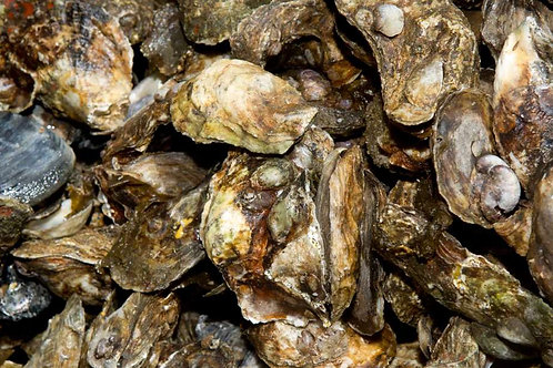 1/2 Bushel Harkers Island NC oysters (PLACE ORDER)