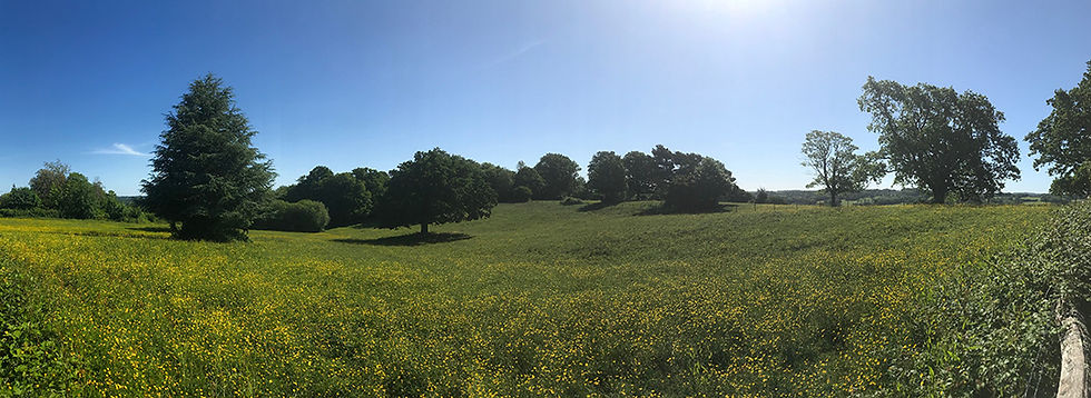 Panorama of Glebe field.jpg