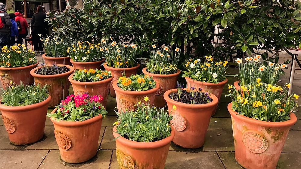 jaro Kew Gardens